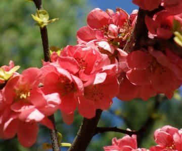Nádherné červené květy